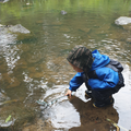 See what living things you find in streams.