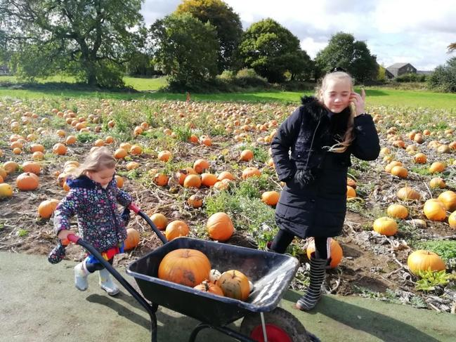 Collecting pumpkins!