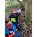 Measuring the height of a tree.