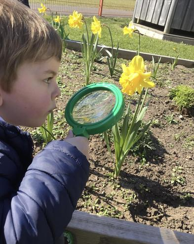 Looking for bugs in our garden.