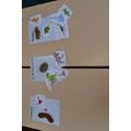 herbivore, carnivore or omnivore?