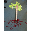 We have been learning about the structure of trees and plants