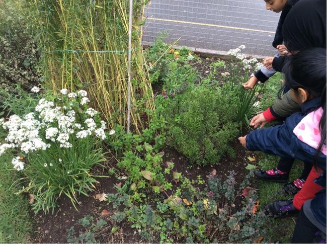 School herb garden.