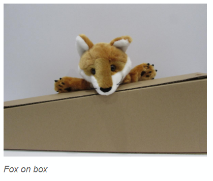 Foxes sit on boxes.