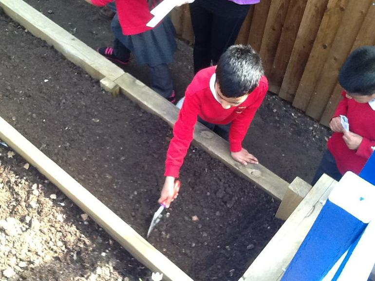 Then we made a small trench to sow them in.