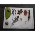 Rocco collected 10 interesting objects
