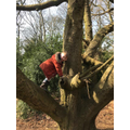 Cohen has found an enormous tree to climb
