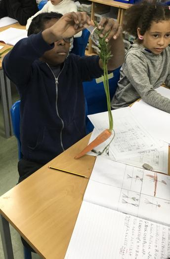 Observing leaves, stems and roots closely.