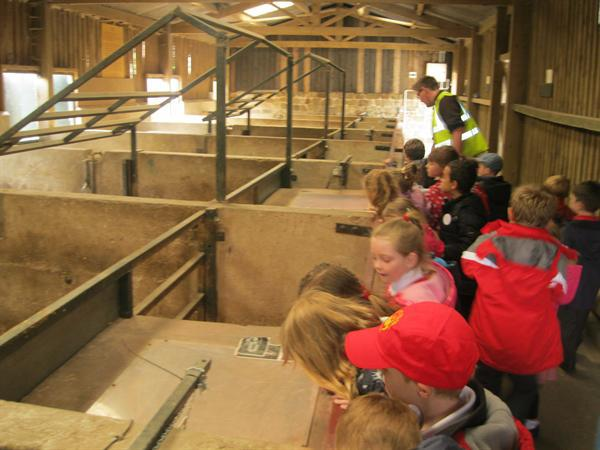 Looking at the piglets!