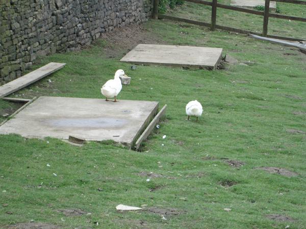 Whirlow Hall Farm 2015