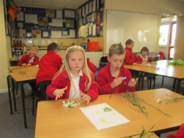 Science Learning- Dissecting Flowers
