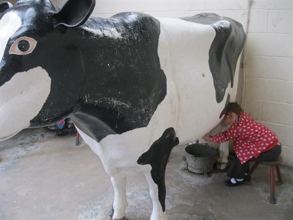 Milking a Cow!