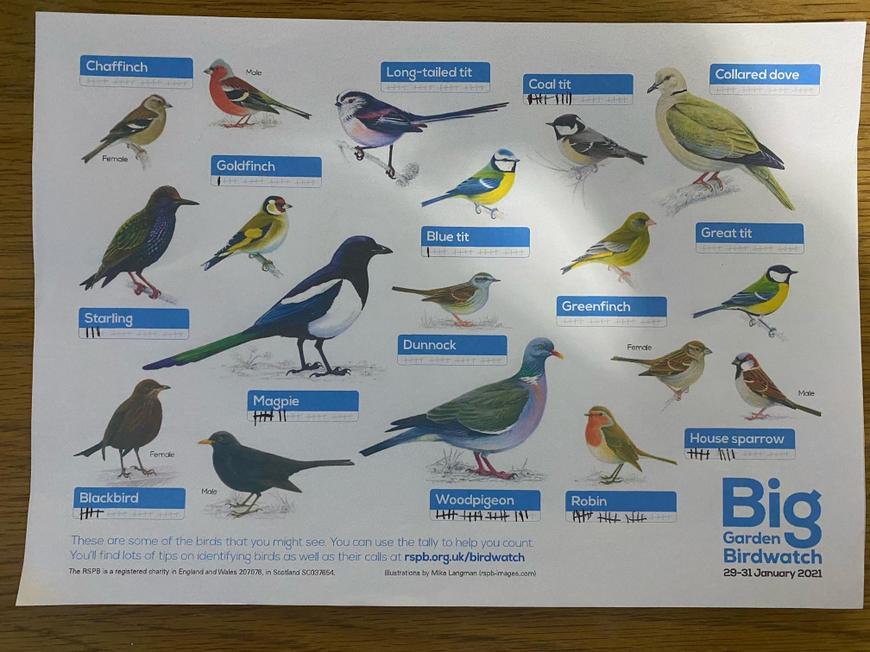 Bird spotting by Rhys Q