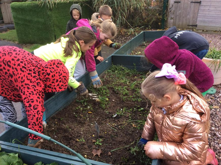 Once the ground was clear, we planted some bulbs