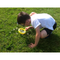 Search for minibeasts in the playground