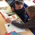 researching minibeasts