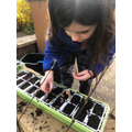 Lottie planting beans