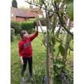 Hannah makes a bird feeder