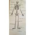 Brinley's skeleton