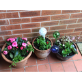 Mrs Ferguson's pots by her front door