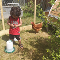 Mrs Parveen's son,Luay with Hetty the chicken