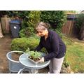 Mrs Gill busy gardening