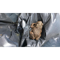Mrs Bexon's son, Harry, found a toad in garden..jpg