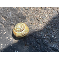 Miss Brown and Charley found a snail.jpg