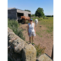 Miss Stanton met some horses