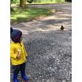 Mrs Parveen's little boy making friends with the ducks