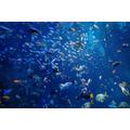 Aquarium 4pm