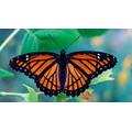 Butterflies 1pm