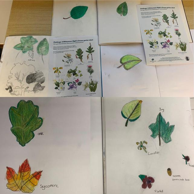 October  Y5 leaf sketches after plant spotting in our school grounds