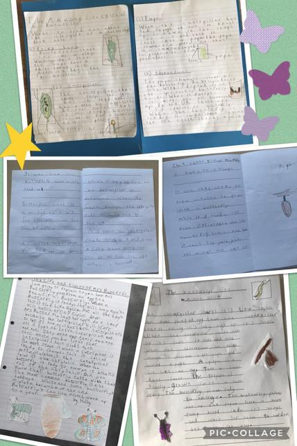 Edited and presented explanation texts from Year 2