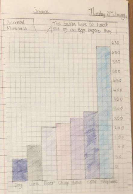 We compared gestational periods in mammals