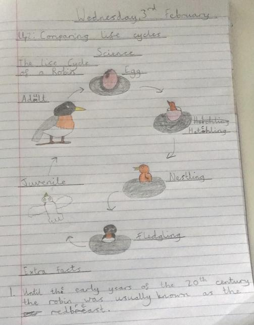Year 5 Lifecycles