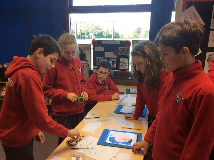 Y6: Which beaked birds will survive?