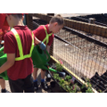 We plant and tend the plants@ Aslockton station