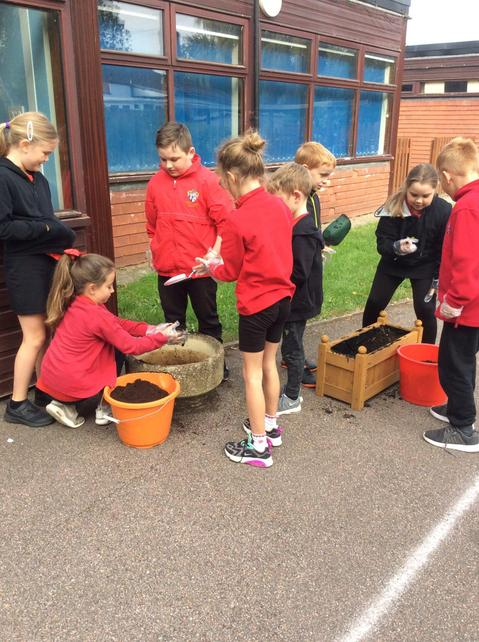 Y4 planting bulbs before writing instructions