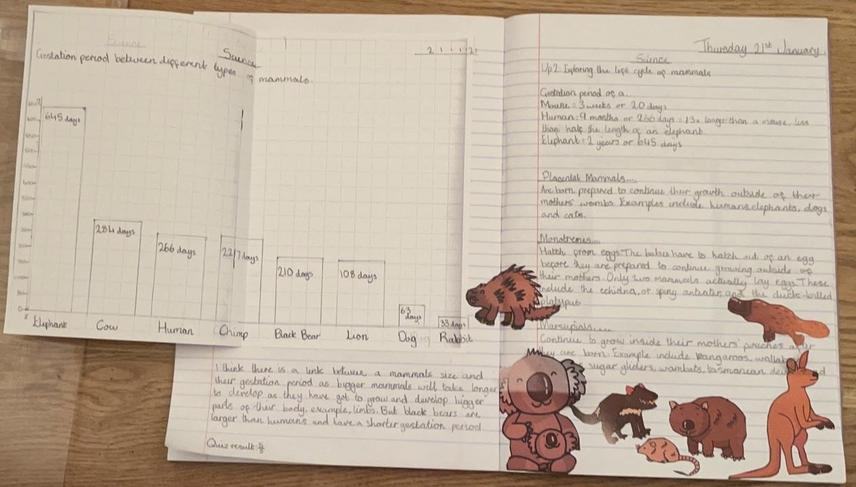We looked at the life cycle of a mammal