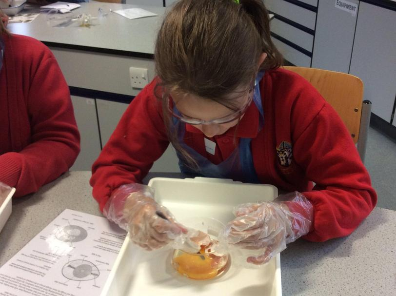Y5 investigating at  a secondary school lab