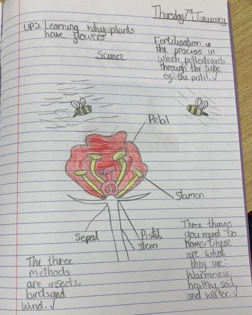 We explored sexual reproduction in plants