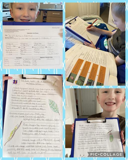 Year 2 - creating an explanation text: planning, writing and publishing
