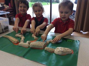 Foundation handling dinosaur bones!