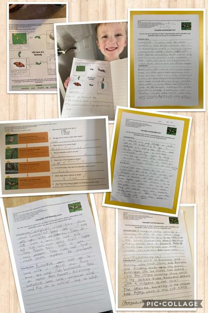 Explanation text writing research in Y2