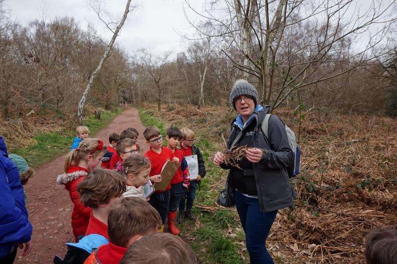 Y2 Learning about Woodland Flora