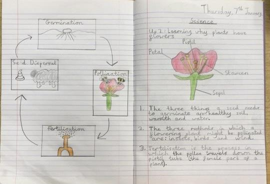 Year 5 have been studying the unit Living Things and Their Habitat