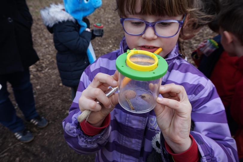 KS1 Minibeast hunting and classifying