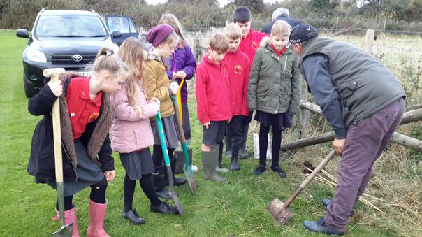 Planting trees and bulbs in the Queen's Wood