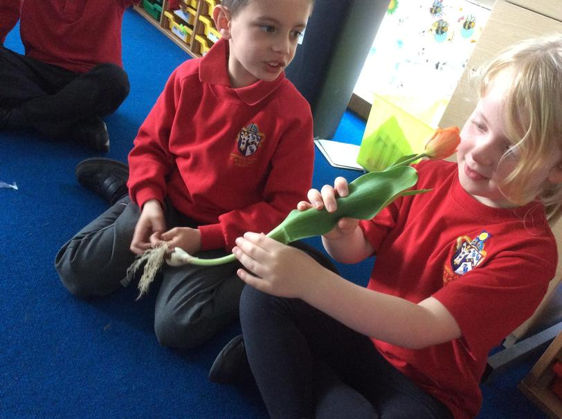 We learnt about roots, leaves, stem and flower.